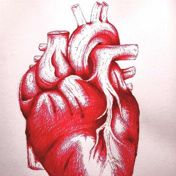 Little bit of love for my page ️ . . . #heart #anatomydrawing #