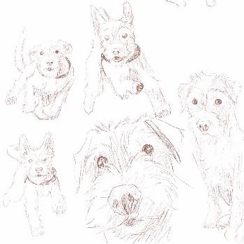 Practicing drawing my dog, Tinus! Swipe for more . #dog #puppy #p