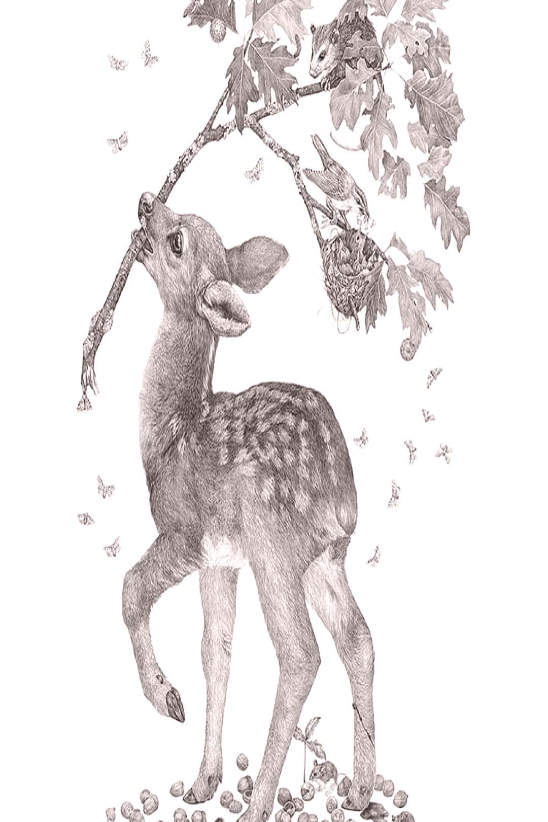 Deers baby BY Follow us for more #draw #drawing #drawings #ske