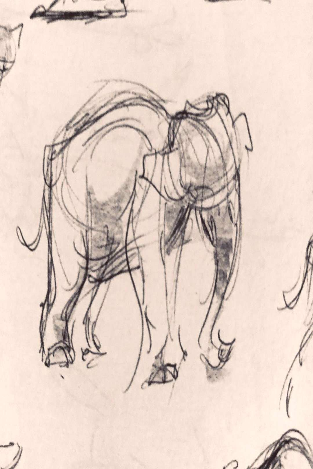 #draw #drawings #drawing doodles #sketch #sketches #animaldrawing