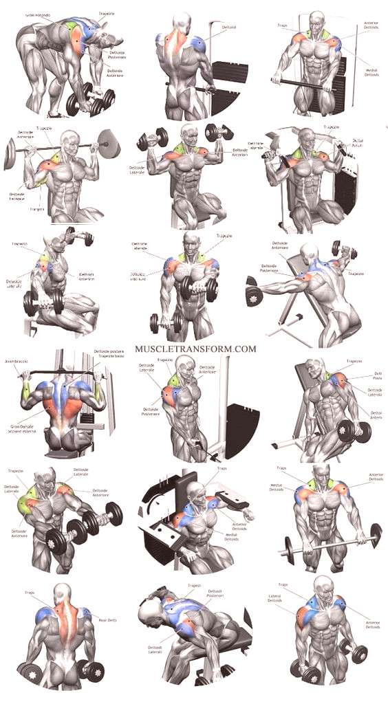 fitness Shoulder workouts to target specific muscle.
