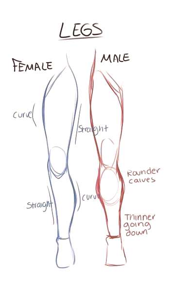 Gender Legs Drawing Reference Guide | Drawing References and Resources…