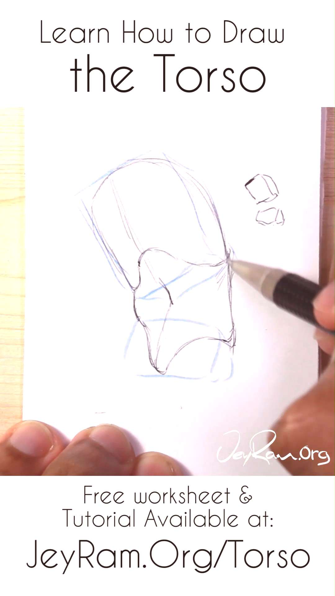 How to Draw the Torso Step by Step Tutorial Learn how to draw the torso of the human body using th