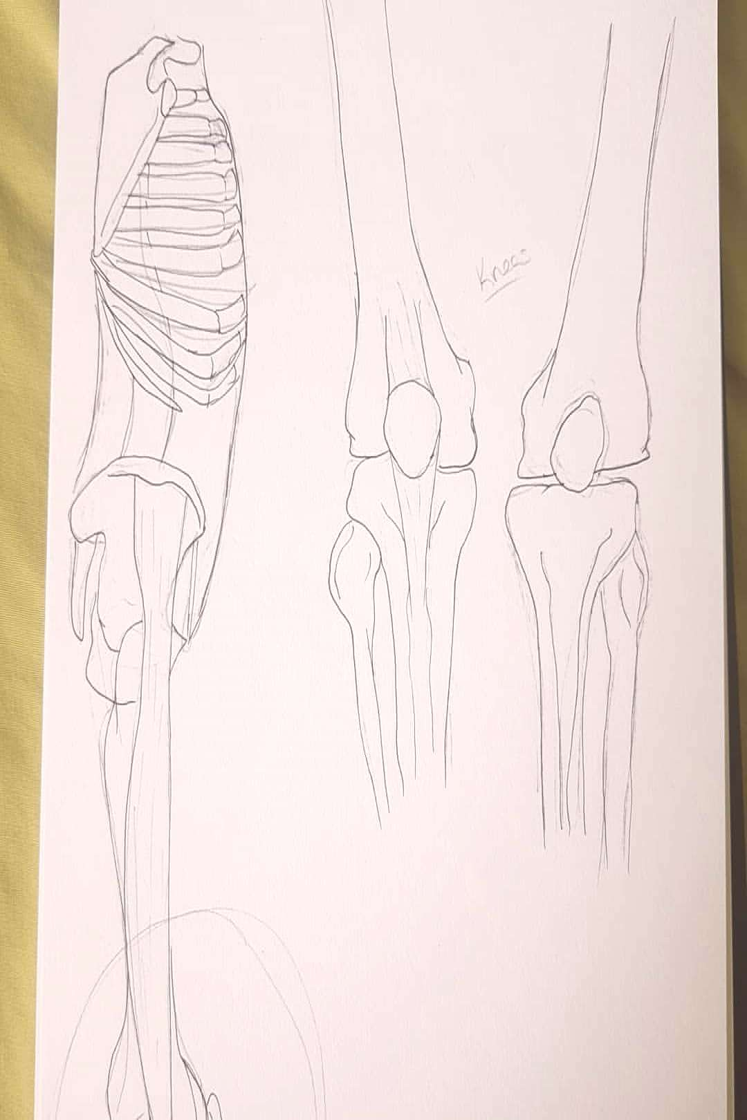 I forgot about drawing these a few months ago, some bone anatomy