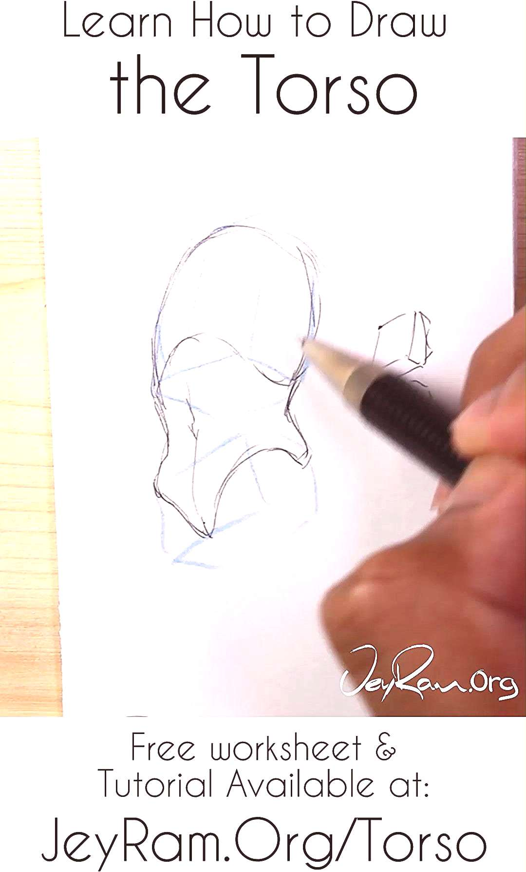 Learn how to draw the torso of the human body using the worksheet and tutorial on the site. Learnin