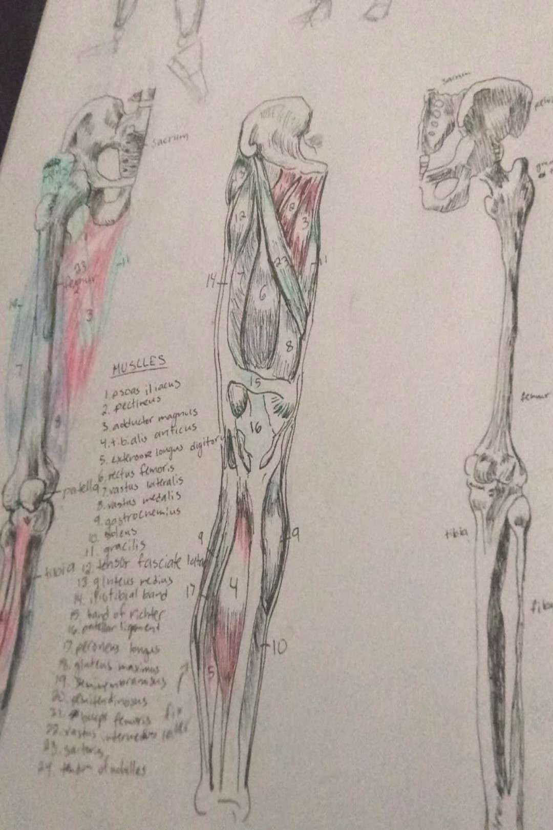 PSA anatomy !! is !! so !! much !! fun !! to !! do !! i became