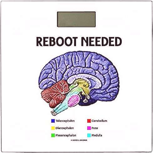 Reboot Needed Anatomical Brain Geek Humor Heres a weighing scale featuring the different parts of