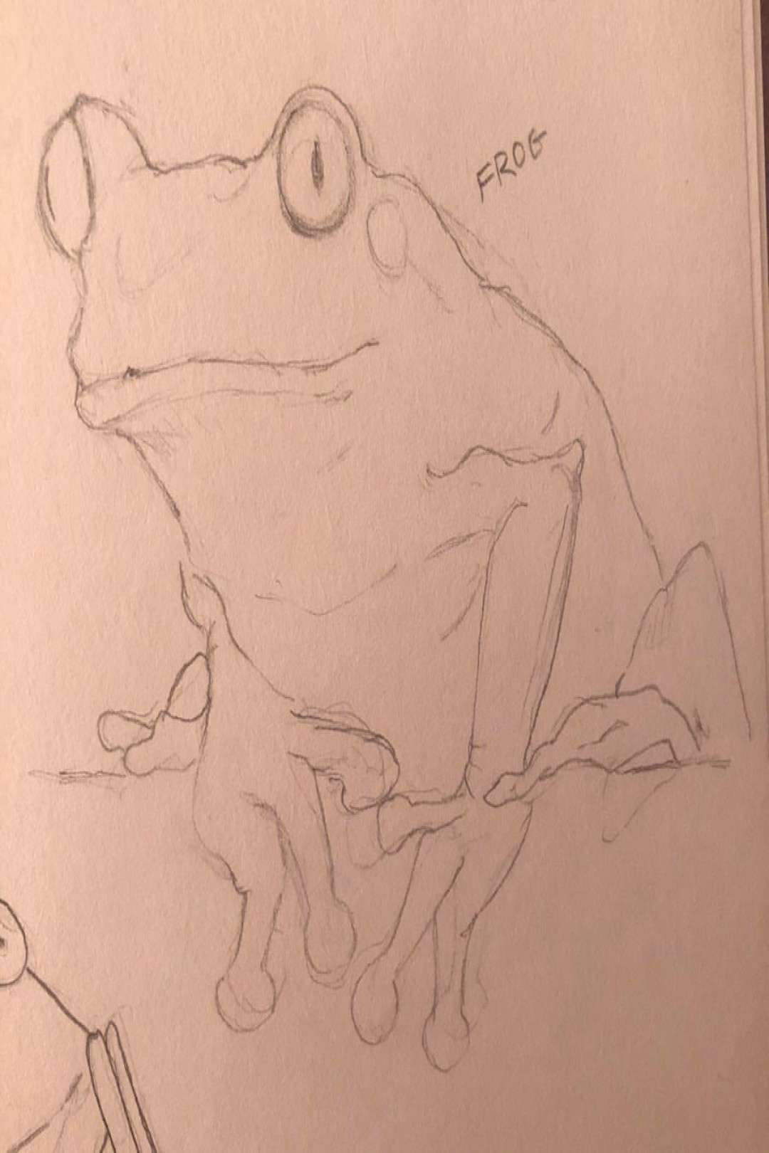 Thoughts on frogs,,,, . . . . . . . . . . . . Hashtags cuz Im de